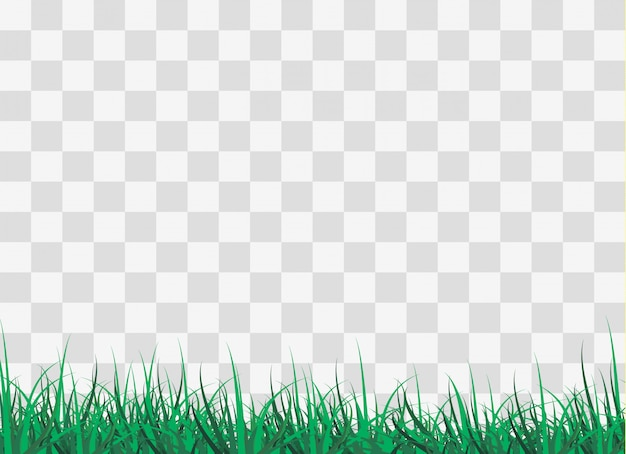 Zielona trawa na polanie w lesie,