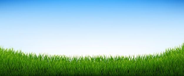 Zielona trawa panorama z niebieskim niebem