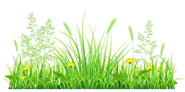 Zielona trawa z mniszkami i kłoskami na białym tle