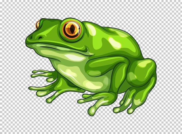Zielona żaba na przezroczystym