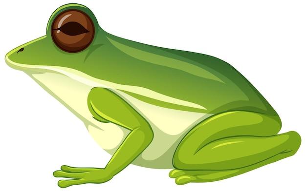 Zielona żaba zwierzę na białym tle