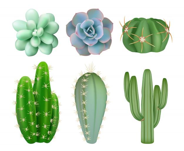 Zielone kaktusy. realistyczne rośliny botaniczne dekoracyjne w meksyku z ilustracjami kwiatów