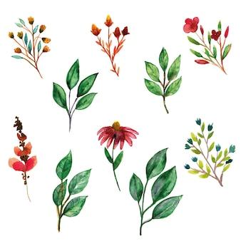 Zielone liście i zestaw akwarela dzikiego kwiatu