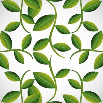 Zielone liście lub liść