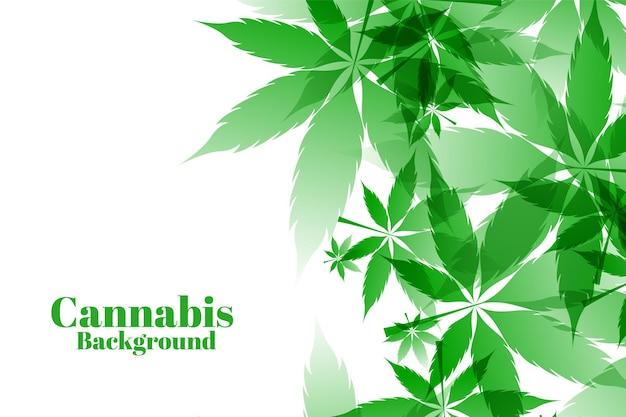 Zielone liście marihuany na białym tle