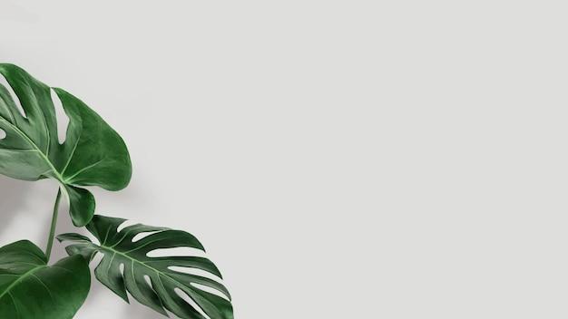 Zielone liście monstery z wektorem przestrzeni kopii