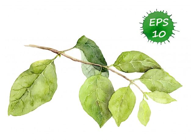 Zielone liście na gałęzi.