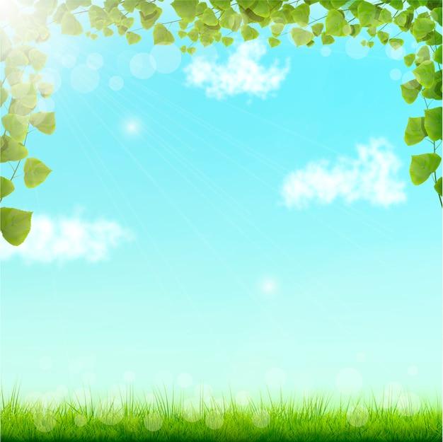 Zielone liście na niebieskim tle nieba