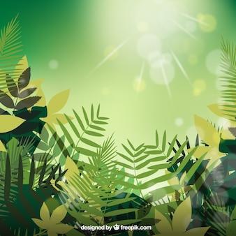 Zielone liście na tle światła
