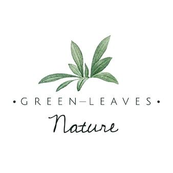 Zielone liście natura logo wektor