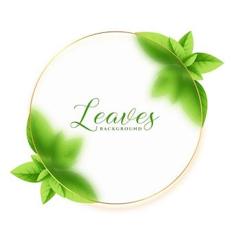 Zielone liście ramki eco tło