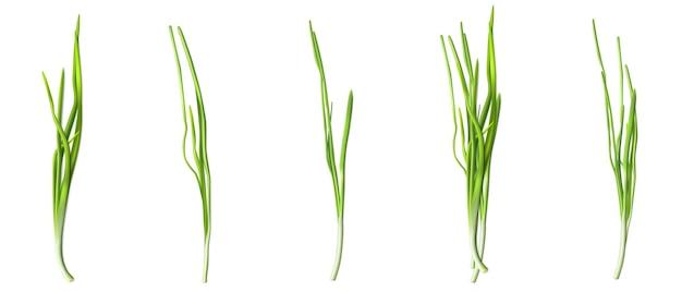 Zielone liście szczypiorku lub cebuli, świeża zieleń czosnku lub szalotka na białym tle.