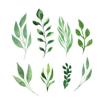 Zielone liście wektor zestaw akwarela.