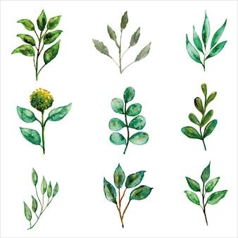 Zielone liście zestaw kwiatowy akwarela