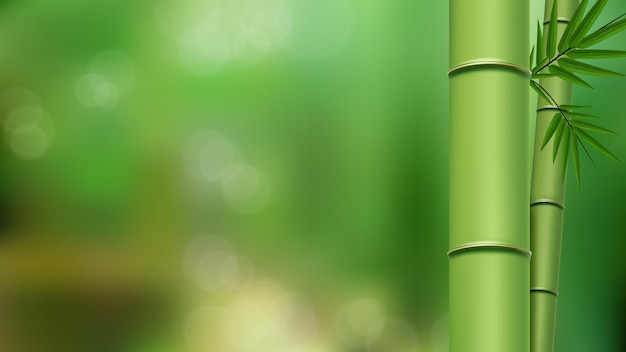 Zielone łodygi i liście bambusa z bliska z kopią miejsca na zielonym niewyraźnym tle