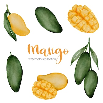 Zielone mango i żółte dojrzałe mango w kolekcji akwareli z owocami i liściem z gałęzi