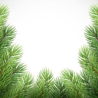 Zielone świerkowe gałęzie jak świąteczna ramka