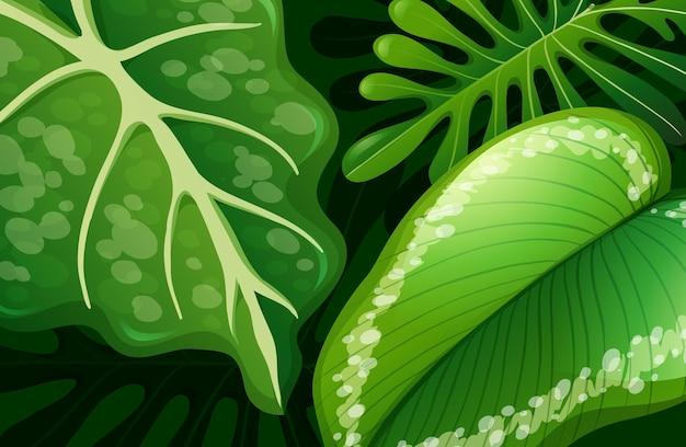 Zielone tropikalne liście w tle