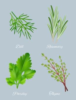 Zielone zioła. realistyczne gatunki dla kulinarnych roślin leczniczych żywności aromatyczne składniki zdrowe liście szablon wektor