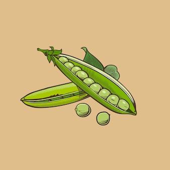 Zielony groszek w stylu vintage. kolorowych ilustracji wektorowych
