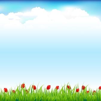 Zielony krajobraz z trawą i czerwonym tulipanem, tło