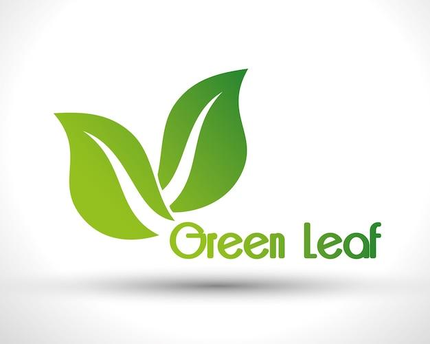 Zielony liść na białym tle projekt