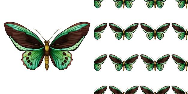 Zielony motyl i bez szwu
