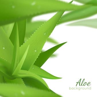 Zielony realistyczny aloes tło