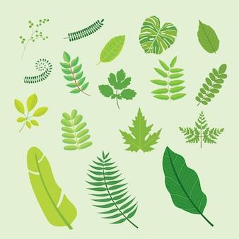 Zielonych roślin tropikalnych liści palmowych