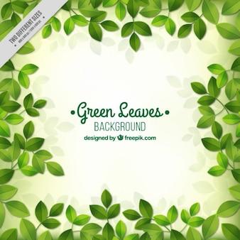 Zielonym tle liści