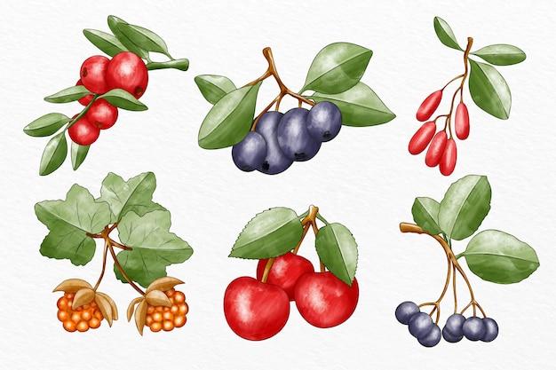 Zilustrowano zbiór różnych owoców
