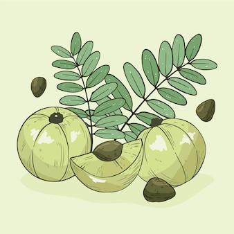 Zilustrowany ręcznie rysowane owoce amla