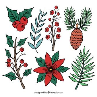 Zimowa kolekcja kwiatów, liści, szyszek, jagód