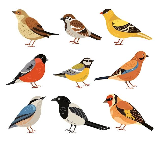 Zimowe ptaki. na białym tle dzikiego ptactwa, kreskówka gil zwyczajny sikora. dzikość jesień zwierzęta leśne, sroka i wróbel ilustracji wektorowych. dziki zimowy ptak, sikorki i gil