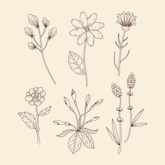 Zioła botaniczne i dzikie kwiaty w stylu vintage