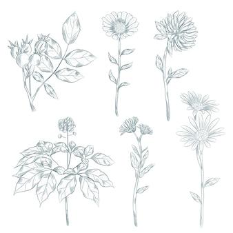 Zioła botaniczne i kwiaty w stylu vintage