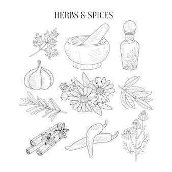 Zioła i przyprawy na białym tle ręcznie rysowane realistyczne szkice