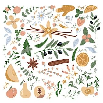 Zioła lecznicze i ich kwiaty, kolekcja ikon roślin, płaskie ilustracje na białym tle.