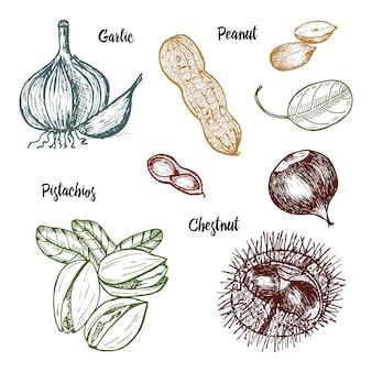 Zioła, przyprawy i przyprawy. pistacje i czosnek, orzechy ziemne i kasztan, nasiona do menu.