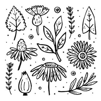 Zioła, zestaw dzikich roślin, clipart. kwiat, gałąź, liść, cebula, jagoda.