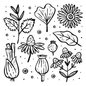Zioła, zestaw dzikich roślin, clipart.