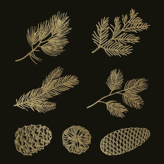 Złota jodła gałęzie i szyszki doodle wektor zestaw