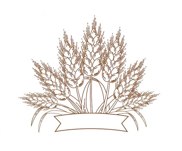 Złote dojrzałe kłosy pszenicy