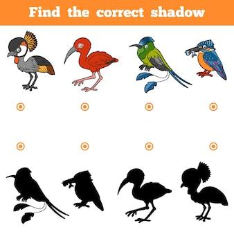 Znajdź odpowiedni cień, gra edukacyjna dla dzieci. wektor zestaw ptaków