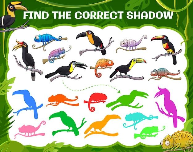 Znajdź odpowiedni cień, tukan, kameleon, grę dla dzieci