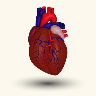 Znak ludzkiego serca, ikona ludzkiego serca, rysunek z kreskówek ludzkiego serca, ikona sieci web ludzkiego serca, nowe serce człowieka, emblemat ludzkiego serca, znak centrum diagnostycznego serca, ikona centrum diagnostycznego serca,