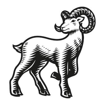 Znak zodiaku baran na białym tle