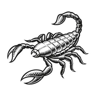 Znak zodiaku skorpion na białym tle