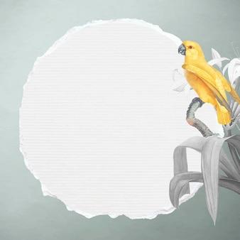 Żółta papuga senegalska i biała lilia z ramką