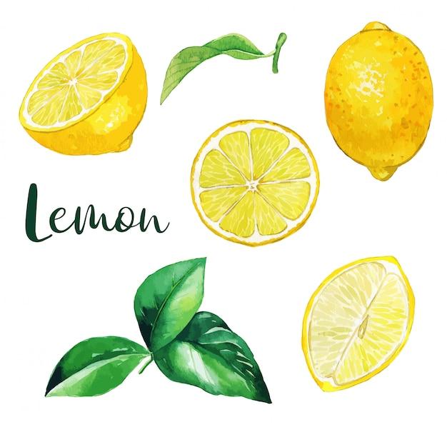 Żółte cytryny owoce i liście, owoce akwarela